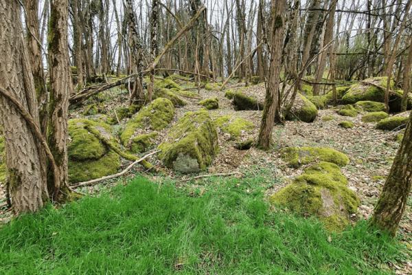 2021-03-06 Paysages au dessus des gorges du Mussy - Prairie sous acacias - Terriers 4