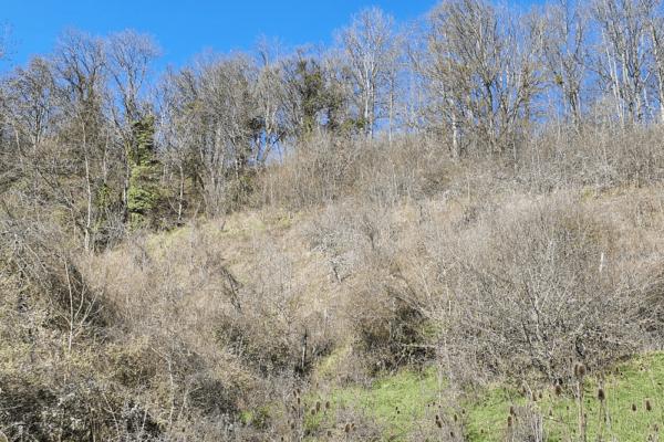 Paysage de forêt sèche autour de la carrière de Barnay (marronniers, érables champêtres, chênes, etc)